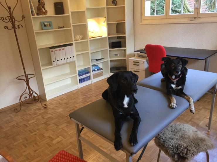 Osteopathie Tiere Praxis Pfeffingen Baselland